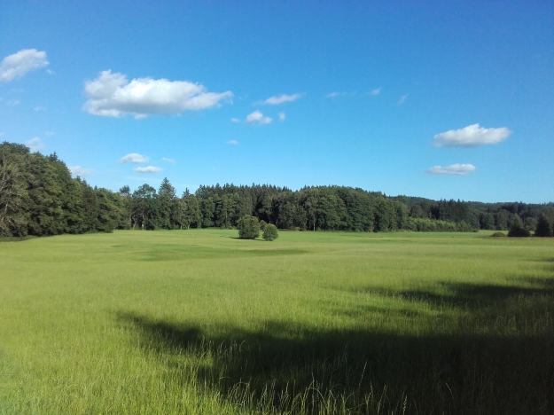 Wald_Allgäu_August
