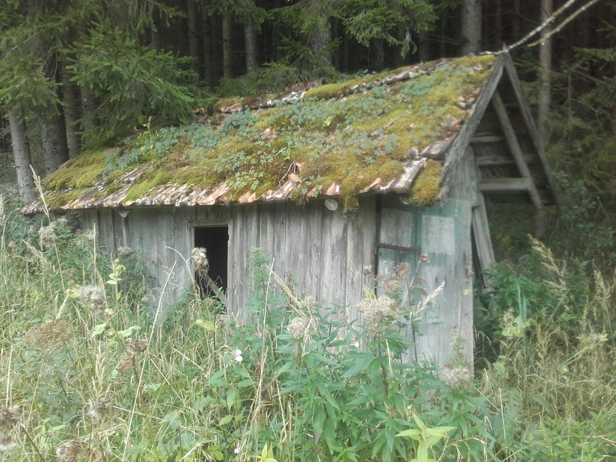 Hütte_Wald_Allgäu_Ostallgäu