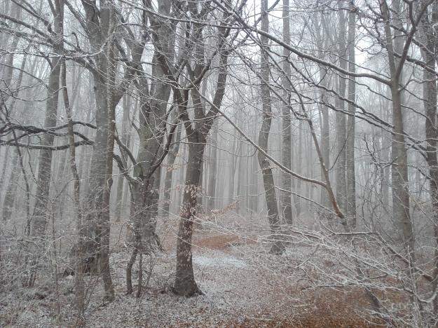 Zwiefaltendorf_Riedlingen_Zwiefalten_Winter_Wald