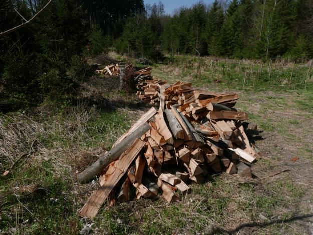Wald_Holz_Unterallgäu_Wandern