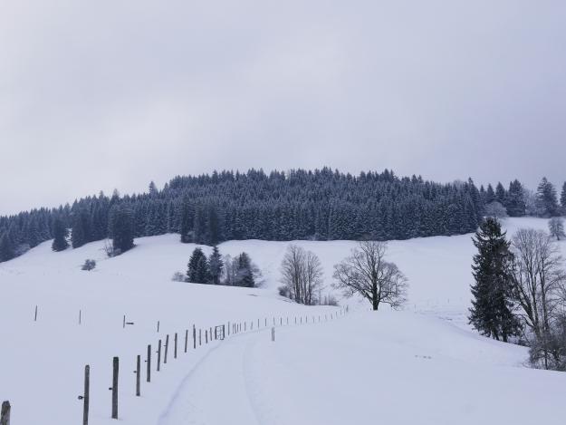 Allgäu_Winter_Westallgäu_Königsalpe_Gschwend