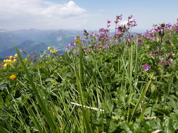 Winterstaude_Bregenzer Wald_Alpen_Wanderung_Berge