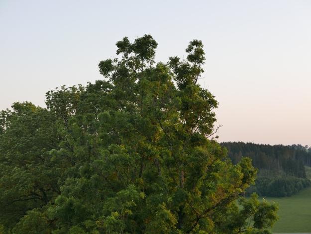 Esche_Sonnenuntergang_Sonne_Allgäu